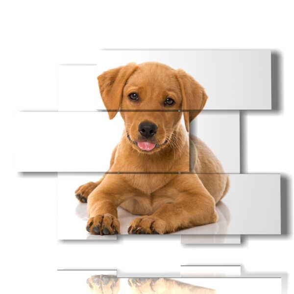 tableaux de chiens qui font la langue