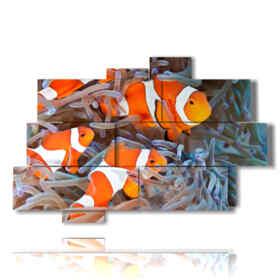 pez payaso cuadro