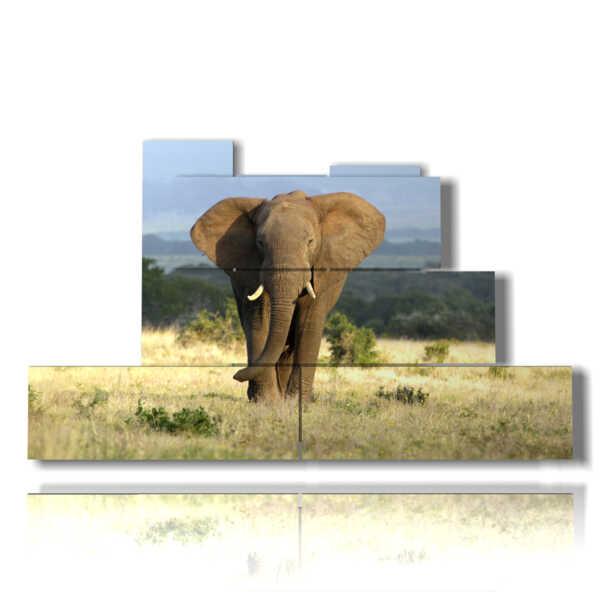 quadri con elefanti nella savana