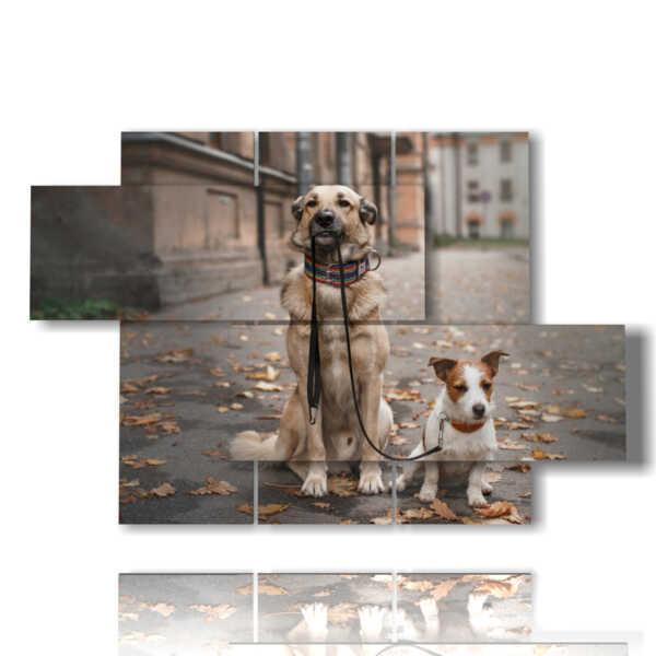 cani nei quadri amici per sempre