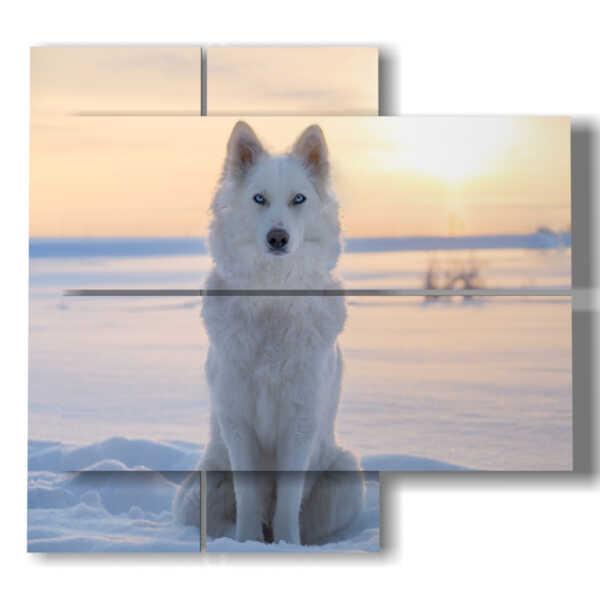 cuadros famoso perro en la nieve en la puesta del sol