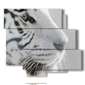 quadri tigre bianca di profilo