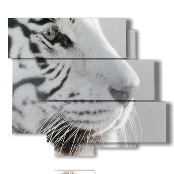 tigre fotografías en blanco