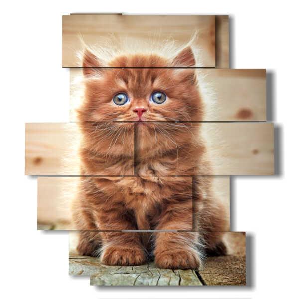 cuadro con un hermoso gato con ojos azules