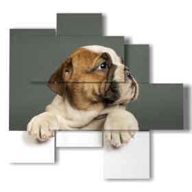 tableaux chiens curieux
