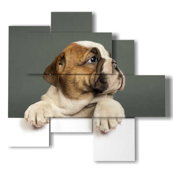 cuadro perros curiosos