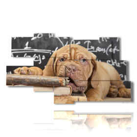 tableaux d'un chien savant