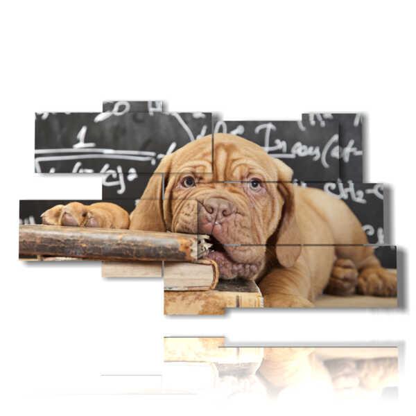 quadro di un cane studioso