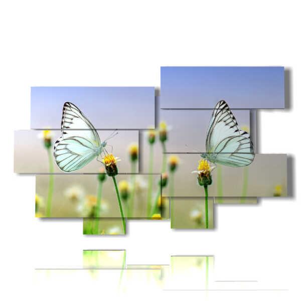 quadri di farfalle bianche