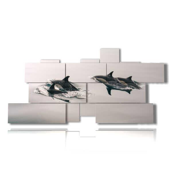 cuadros con imágenes de peces y orcas