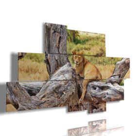 quadri di leone in relax