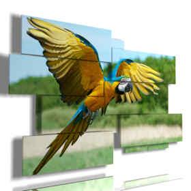 quadro con pappagallo in volo