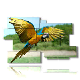 frame with parrot in flight