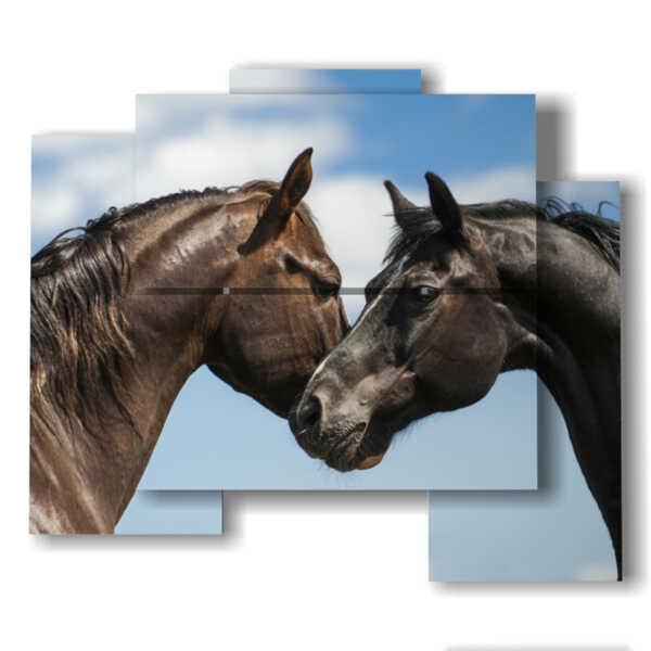 quadri di cavalli innamorati