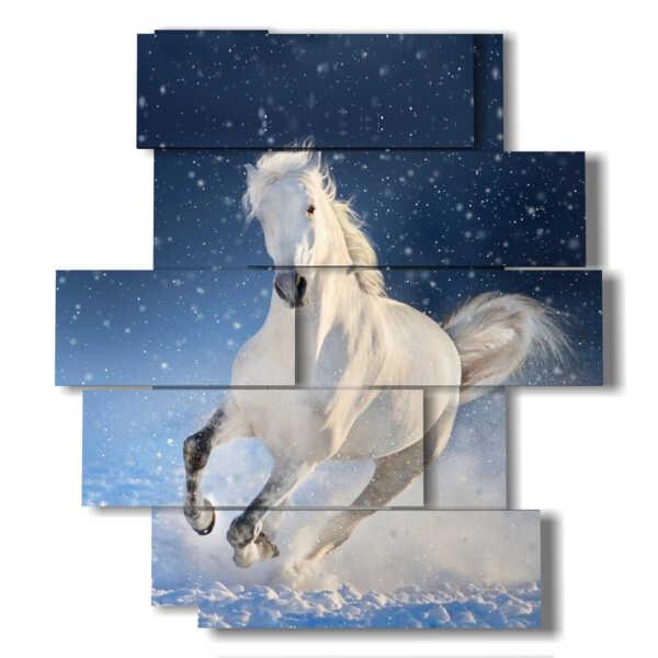 photo avec stellaire cheval blanc