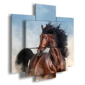 quadri moderni cavalli in primo piano