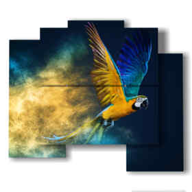 paintings of parrots in a blue yellow powder