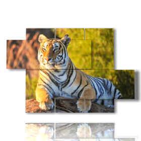 quadro con tigre in attesa sul tronco