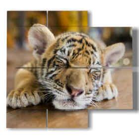 Tiger tableaux avec chiot