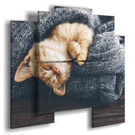 paintings cats wrapped in the cover