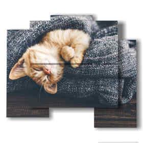 gatti quadri avvolti nella copertina