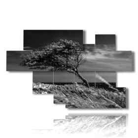 quadri albero piegato dal vento