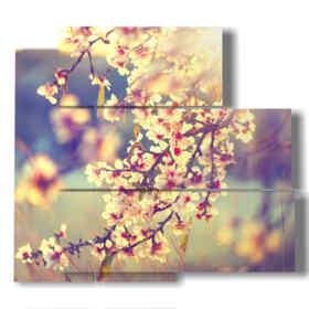 quadri di alberi in fiore ciliegio
