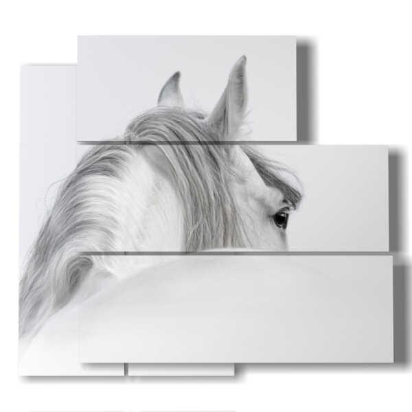 caballo en imagen de perfil