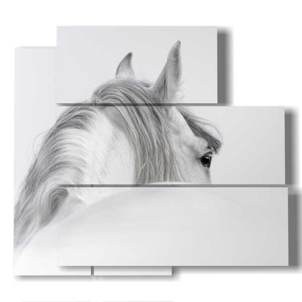 horse in profile picture
