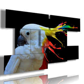 Parrot color painting picture