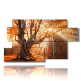 tableaux d'arbres dans un magnifique coucher de soleil