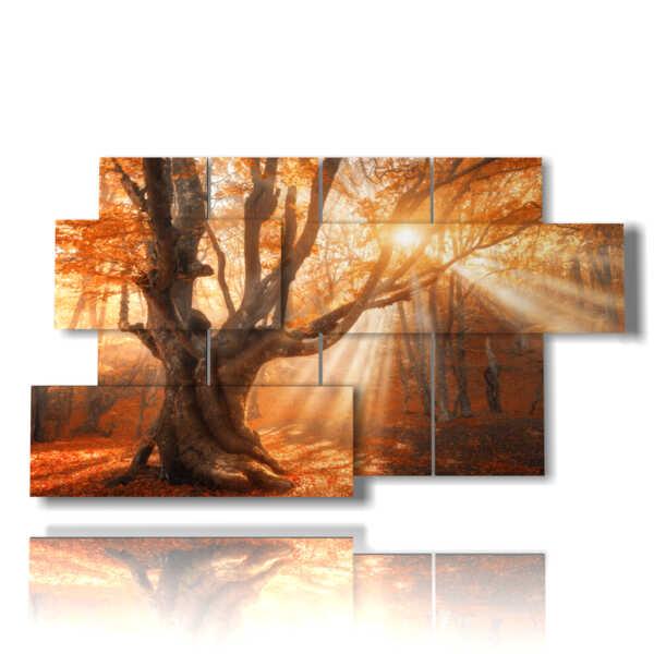 imágenes de árboles en una increíble puesta