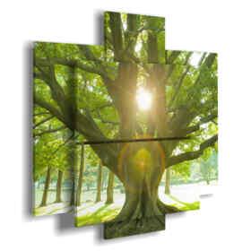 tableaux avec l'arbre avec le soleil entre les branches