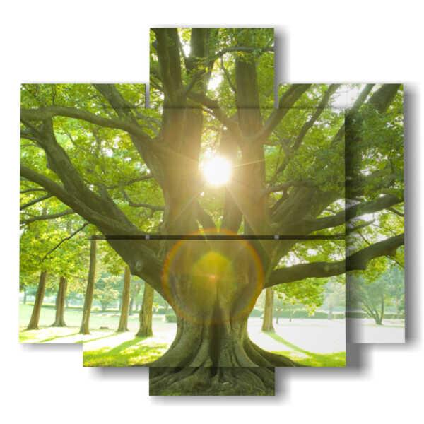 quadri con albero col sole tra i rami