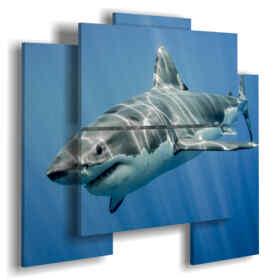 Bilder Hai im tiefen Blau