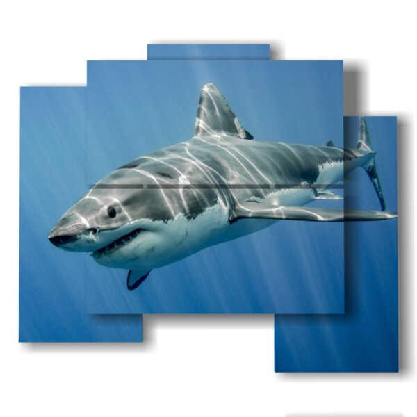 cuadros tiburón en azul profundo