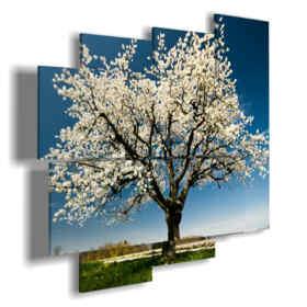 cuadros árboles en flor