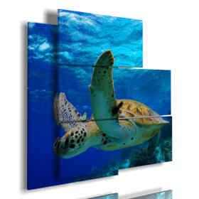 quadri con i pesci e tartarughe