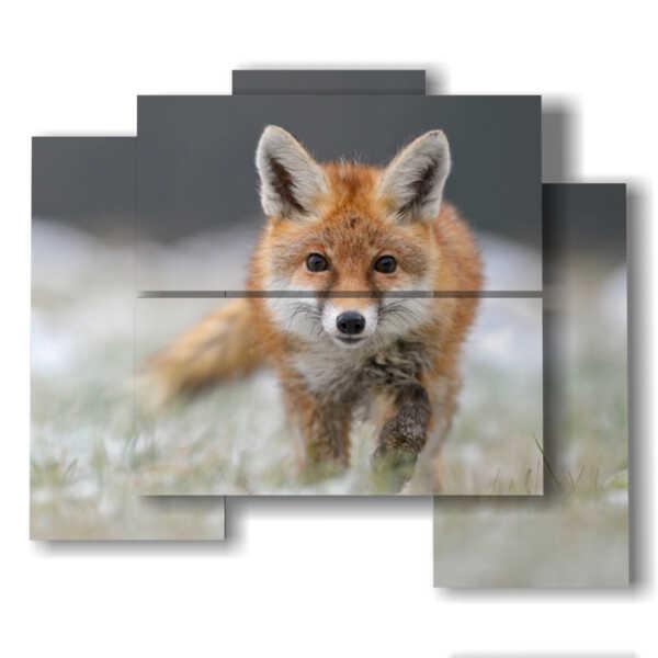quadri foto animali selvatici