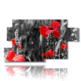 quadro foto papaveri bianco nero rosso