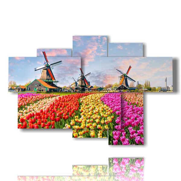 quadri con tulipani colorati in un paesaggio tipico Olandese