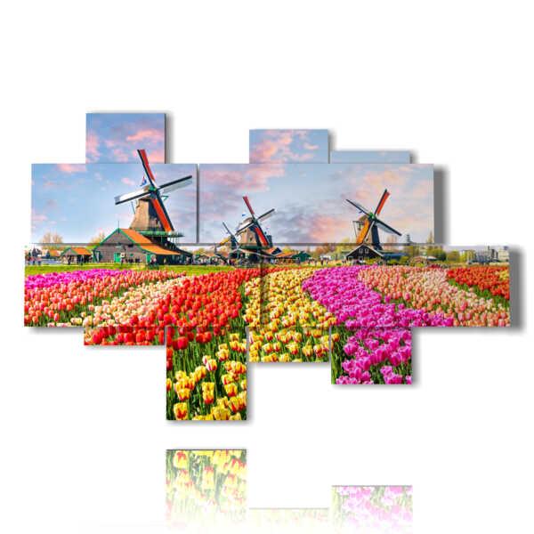 cuadros con tulipanes de colores en un paisaje típico holandés