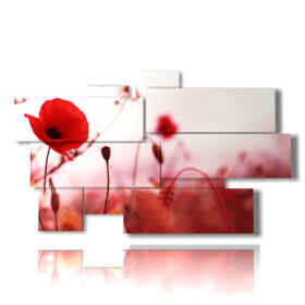flowers modern pictures portrait red poppies effect