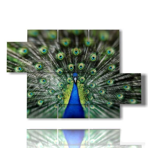 beautiful peacock tail painting