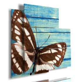 cuadro con alas de mariposa marrón y blanco