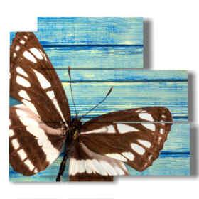 quadro con ali di farfalla marrone e bianco