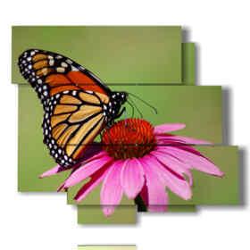 quadri farfalle colorate in fiori colorati