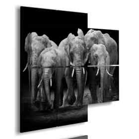 cuadros con los elefantes en la manada