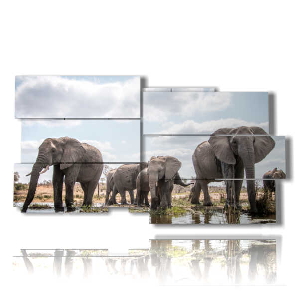 picture with photos African elephants