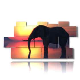 quadro con foto elefanti al tramonto